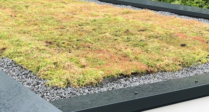 Our studio has a green roof!